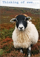 Thinking of Ewe Farrow Spec