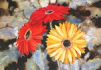 Red Hot Summer Gerberas