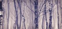 Birches 8