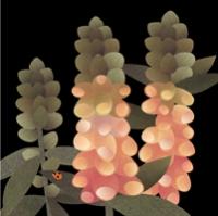 foxglove f&b