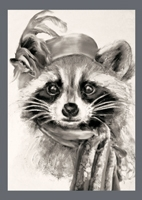 003RACCOON
