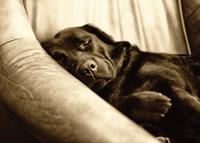 Sepia Sleepyhead