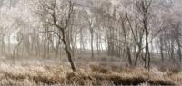 Misty Trees 7